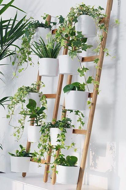 plantes déco 2019